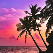 Tropical Evening