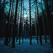 Night In A Frozen Forest